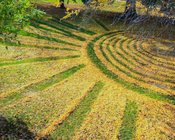Leaves raked into a radiating pattern